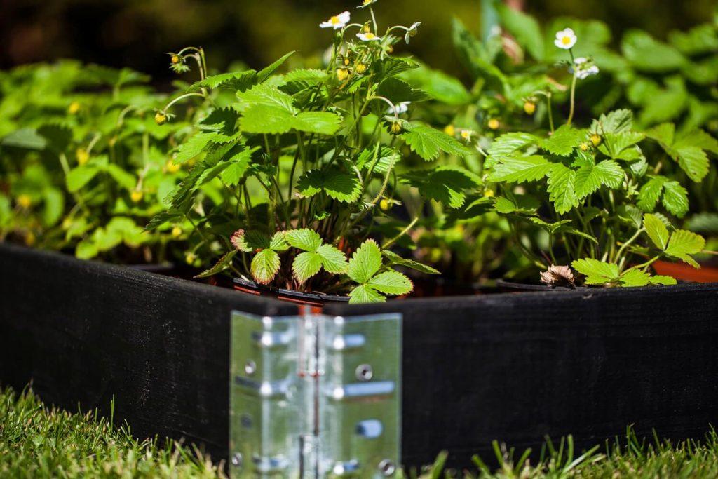 gardenstax-raised-garden